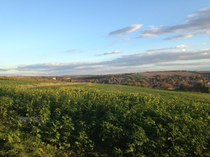 The view from the vineyard.